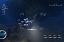 Reef Shot 4