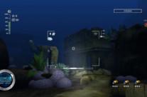Reef Shot 8