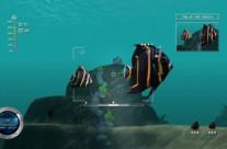 Reef Shot 11